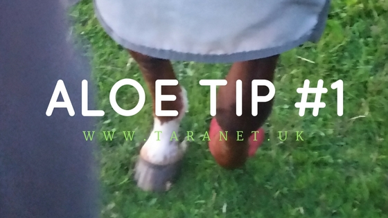 Aloe Tip #1